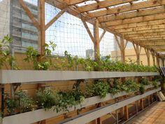 大森のデパート の画像|日本一の環境緑化の会社 ㈱プラネットの「生き生き日記」