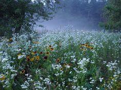 Des Fleurs Pour Algernon, Plants Are Friends, No Rain, Felder, Nature Aesthetic, Faeries, Beautiful World, Aesthetic Pictures, Wild Flowers