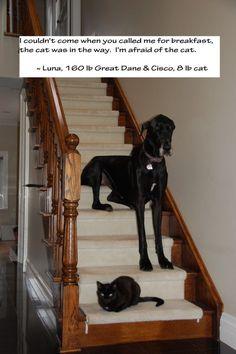 Poor Luna. The Best of Dog Shaming - Part 19 | Little White Lion