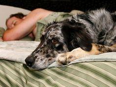 ¿Pueden las mascotas ayudar a dormir? Las mascotas sólo para las personas que no tienen problemas para quedarse dormid@s, se dice que está bien permitir que un perro o un gato duerma en tu cama. Hay todo tipo de beneficios médicos para tener una mascota. Y algunas personas pueden sentirse …