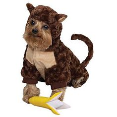 Cute Brown Monkey Suit For Dogs Pet Clothing Size 2 Cute Brown Monkey Suit For Dogs Pet Cloth Cute Halloween costume for