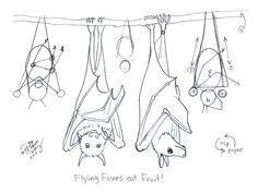Draw Bats 3 by ~Diana-Huang on deviantART