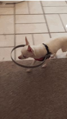 """Fantastic stuff! - """"Blind Dog's Family Invents A Device That Changed His Life"""""""