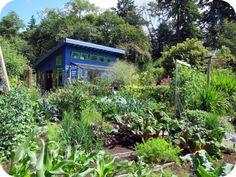 Birrell 'shed' and veggie garden