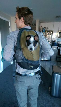 Post with 1833 views. I read somewhere that dogs are pack animals. Pet Dogs, Dogs And Puppies, Cute Puppies, Doggies, I Love Dogs, Puppy Love, Austrailian Cattle Dog, Blue Dog, Best Funny Pictures