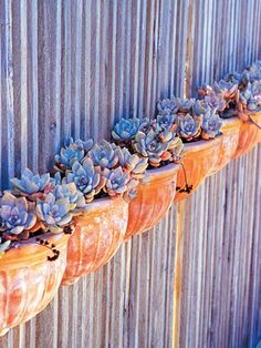 potted echeveria as horizontal accent on fence