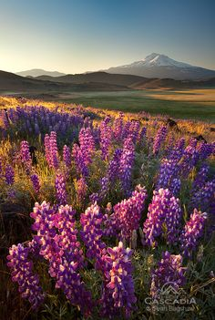 Sean Bagshaw - Searching For Spring - Mt. Shasta, California