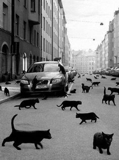 cat Black and White cats bw Black Cat animatur Crazy Cat Lady, Crazy Cats, I Love Cats, Cool Cats, Foto Flash, Animal Gato, Belle Photo, Pets, Cat Art