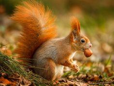 """Lustige Eichhörnchen: """"Nicht ohne meine Nuss!"""" - Seite 1"""
