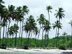 A Praia de Carneiros é deslumbrante. É considerada uma das praias mais bonitas do Brasil. Um passeio de barco pelas águas nos possibilita paisagens lindas como essa.  http://ift.tt/1QHsusW #mundoafora #dedmundoafora #mundo  #travel #viagem #tour #tur #trip #travelblogger #travelblog #braziliantravelblog #blogdeviagem #rbbviagem #tripadvisor #trippics #instatravel #instagood #wanderlust #photooftheday #blogueirorbbv  #blogueirosdeviagem #boaviagemoglobo #voegol #praiadecarneiros #carneiros…