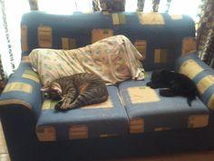 #Tom #Puppys #Cat #Mymonsters #NewSister #Freya #Dog #BlackDog #BlackGolden #GoldenRetriever- Enero 2014