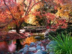 One of my favorite places in the fall...  MN Landscape Arboretum