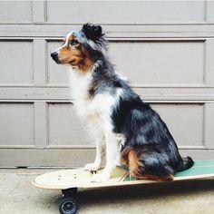 skate pup