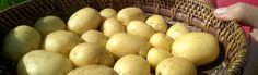 Colomba – Pyöreä uutuus pesuun ja kuorintaan
