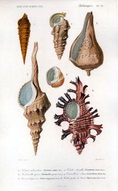 @Kari Jones Jones Jones Jones Pulice --- vintage printables - beach related