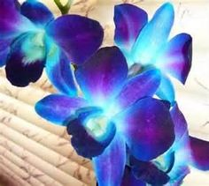 Purple Dendrobium Orchids   Apospurple: I want these in all the boquets....with callalillies