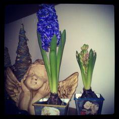 Mis bulbos de invierno