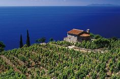 Campo Lo Feno - The Island of Elba - Tuscany