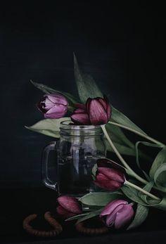 Flowers. Tulips. Floral.  CHRISTINA GREVE