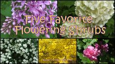 Sew Crafty Angel: Five Favorite Flowering Shrubs