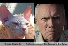 Hehe. I loved #grantorino and I really want a #sphynx cat
