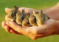 Teeniest bunnies!
