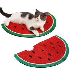 Watermelon Cat, Watermelon Designs, Cat Scratcher, Cat Toys, Cats Of Instagram, Cats And Kittens, Crazy Gifts, Your Pet, How To Memorize Things