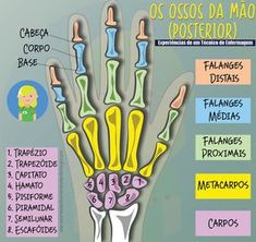 Os Ossos da Mão divide-se em três partes: carpo, metacarpo e falanges. O carpo é constituído por oito pequenos ossos que se articulam uns com os outros e funcionam harmonicamente. Qualquer perturba… Human Skeleton Anatomy, Human Body Anatomy, Human Anatomy And Physiology, Muscle Anatomy, Medicine Notes, Mental Map, Medical Laboratory Science, Medical Anatomy, Anatomy Study
