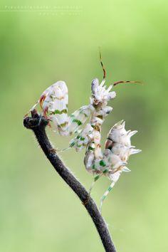 52 Mejores Im 225 Genes De Mantis Praying Mantis Animals