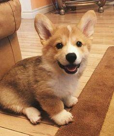 So cute Puppy More