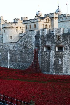 A stunning art installation currently on display at the Tower of London: 888,246 ceramic poppies commemorating lives lost in the First World War