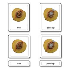 Parts of a Fruit - Childrens House Colorful Pictures, Kids House, Card Sizes, Botany, Students, Rest, Canning, Gray, Colors
