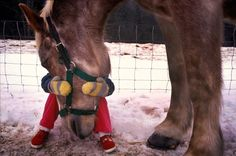The comforts of having a horse