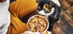 Homemade Cat Food - Is It The Right Choice For You? Food Bowl, A Food, Homemade Cat Food, Running Food, Pet News, Cat Behavior, Food Dishes, Dog Food Recipes, Nutrition