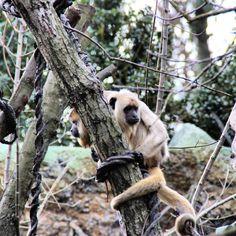 baumbewohner #affen aus dem #zoo #leipzig