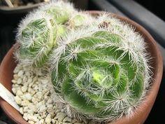 2012年12月 - My favorite plants