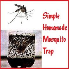 This super simple homemade mosquito trap is very effective and cheap to make! You will be shocked at how many you actually get with this easy peasy do-it-yourself solution! What You Will Need… 2L pop bottle, 1 cup water, 1/3 cup brown sugar, 1 packet of yeast, scissors. How To Make A Simple Homemade …