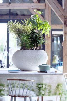 Massive Dekoration auf einem großen Esstisch mit Zimmerbäumen statt Blumen – Pflanzenfreude.de. #pflanzenfreude #zimmerbäume