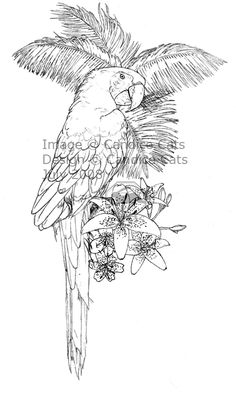 parrot tattoo drawings