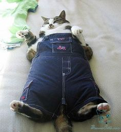 Overall, I don't think I'm too fat #fat #cat