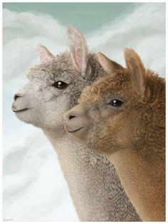 Alpacas by Plaguedog.deviantart.com on @DeviantArt