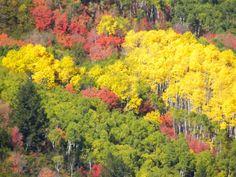 Fall in Park City Utah Park City Utah, Autumn, Fall, Leaves, Plants, Painting, Beauty, Beautiful, Fall Season