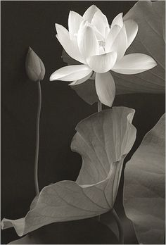 """https://flic.kr/p/4VW6nS 
