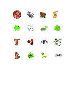 Les Animaux Qui Hibernent : animaux, hibernent, Idées, HIBERNATION, Animaux, Hibernent,, Animaux,, Hibernation