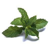 Yogurt-Mint Salad Dressing - GoodHousekeeping.com