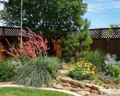 Backyard Texas native garden