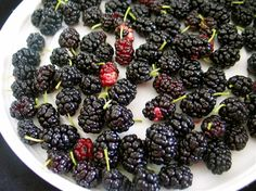 Mulberry: knowledge, divination, wisdom, the will Zimbabwe Food, Zambian Food, Education In England, South African Recipes, Ethnic Recipes, Culture Day, Healthy Fruits, Fruit And Veg, Fruit Trees