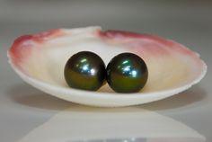 Ladies Tahitian Pearl Earrings, 14.5-15mm pearls set in 14kw gold. John Ford Jewelers #galveston