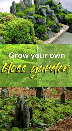 Grow your own Moss Garden How to get mosses in the garden Nature Bring Lawn And Garden, Indoor Garden, Outdoor Gardens, Garden Pests, Garden Tools, Herbs Garden, Fruit Garden, Flowers Garden, Organic Gardening