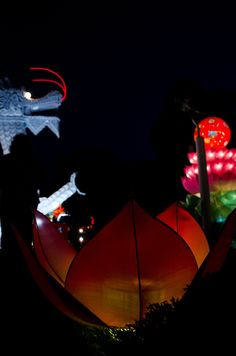 There they glow! Chinese Lantern Festival Opening Weekend. Photo by Taylor Ringenberg.